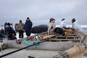 Seal skin boat